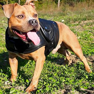 leather dog jacket coat collar walking harness labrador boxer pitbull